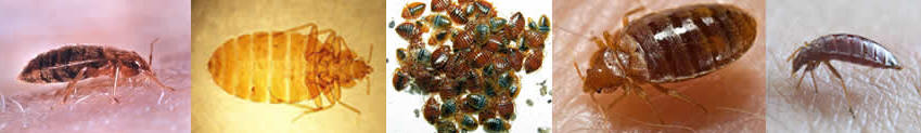 How To Not Let Bed Bugs Spread